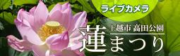 高田公園『東洋一の蓮花群』- ライブカメラ