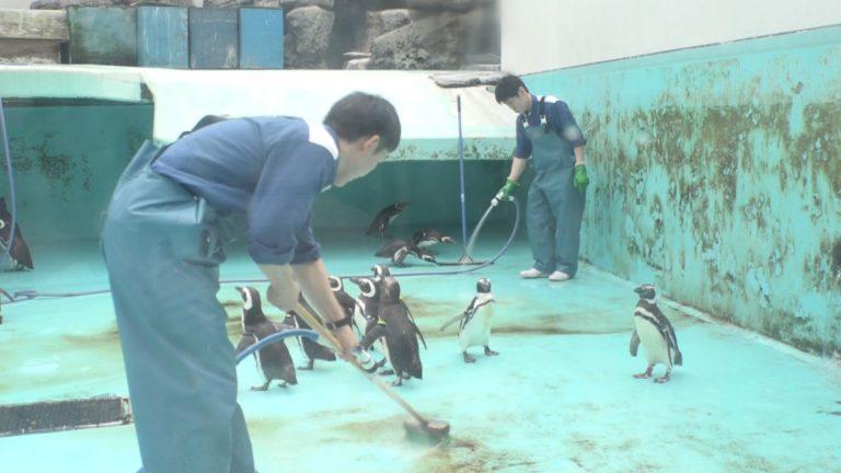 ペンギンランド掃除6