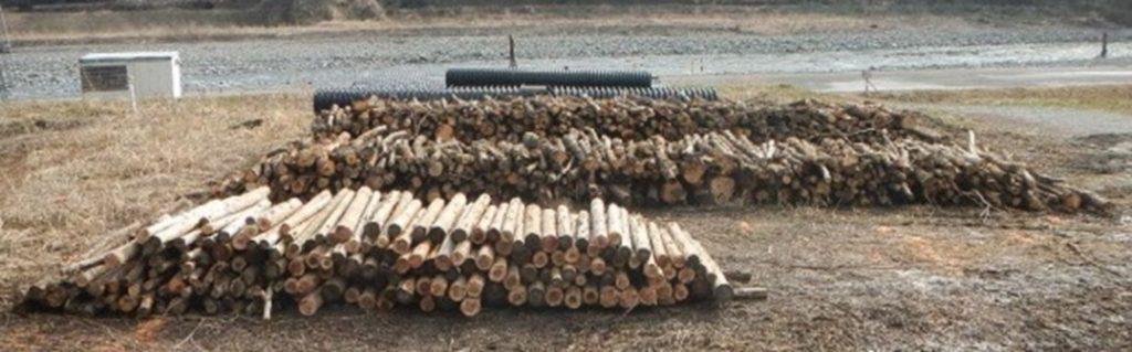 伐採木_そのままのサイズ