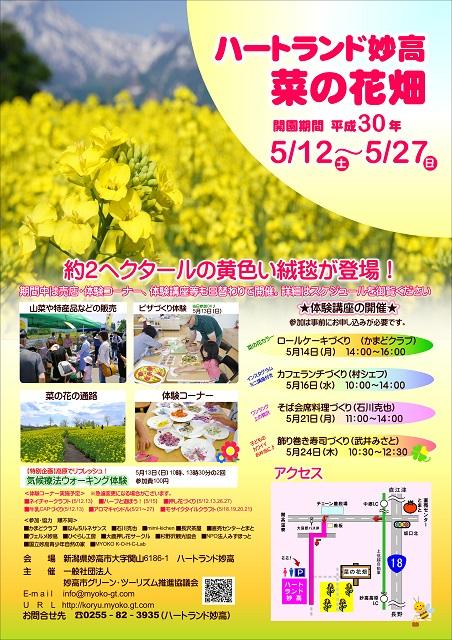 菜の花畑チラシ