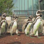 ペンギンの引っ越し3