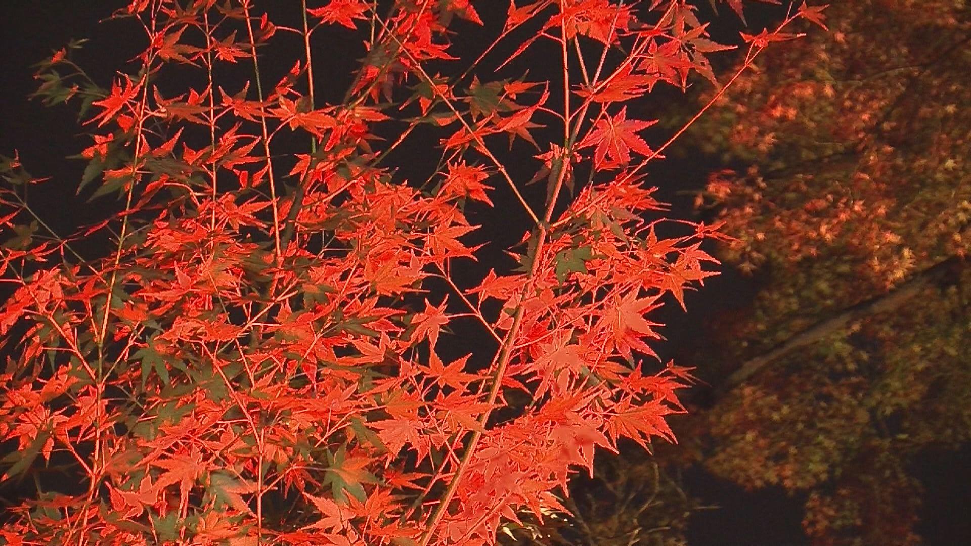 181107_陀羅尼八幡神社モミジのライトアップ4