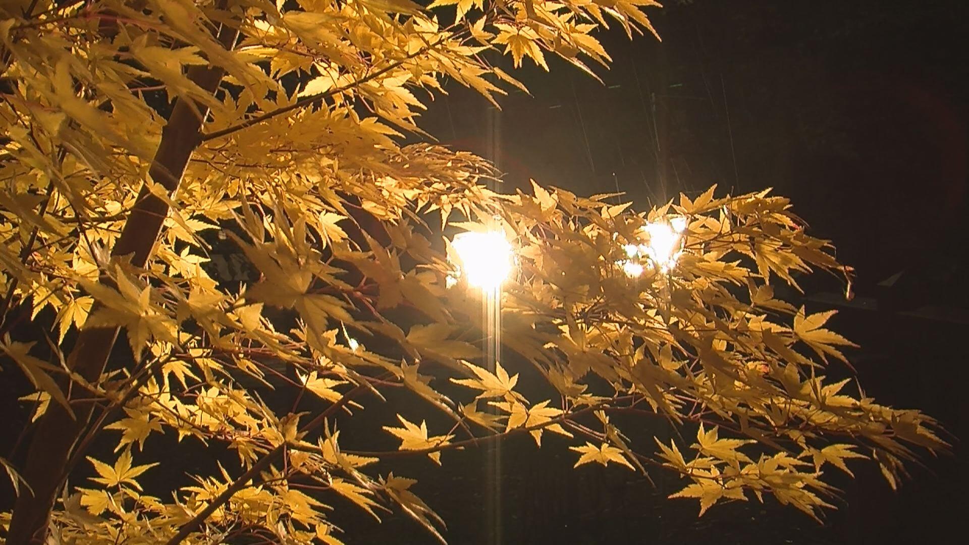181107_陀羅尼八幡神社モミジのライトアップ3