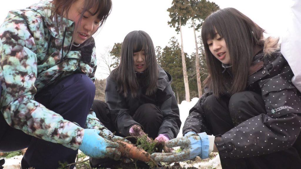 190208_雪下ニンジン 高田農業高校生徒が収穫体験