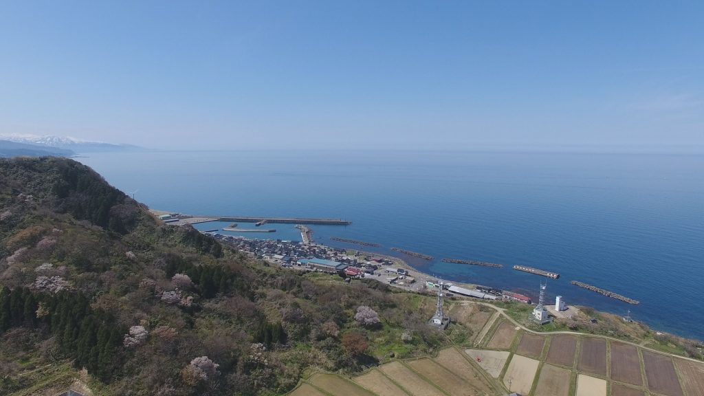190501~百景宇山櫻4