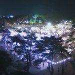 190410_高田公園夜桜
