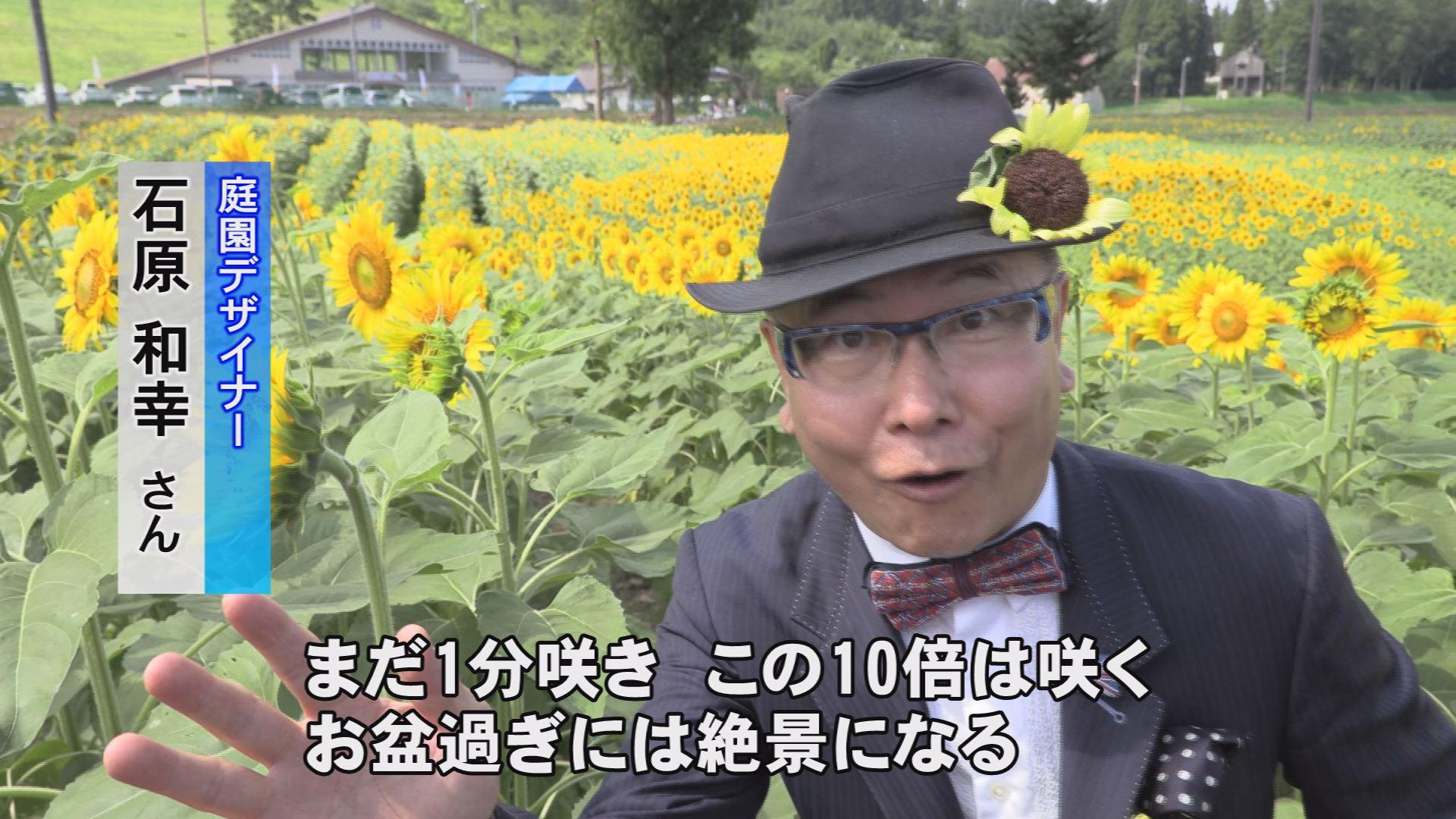190813_ひまわりコキア王国7