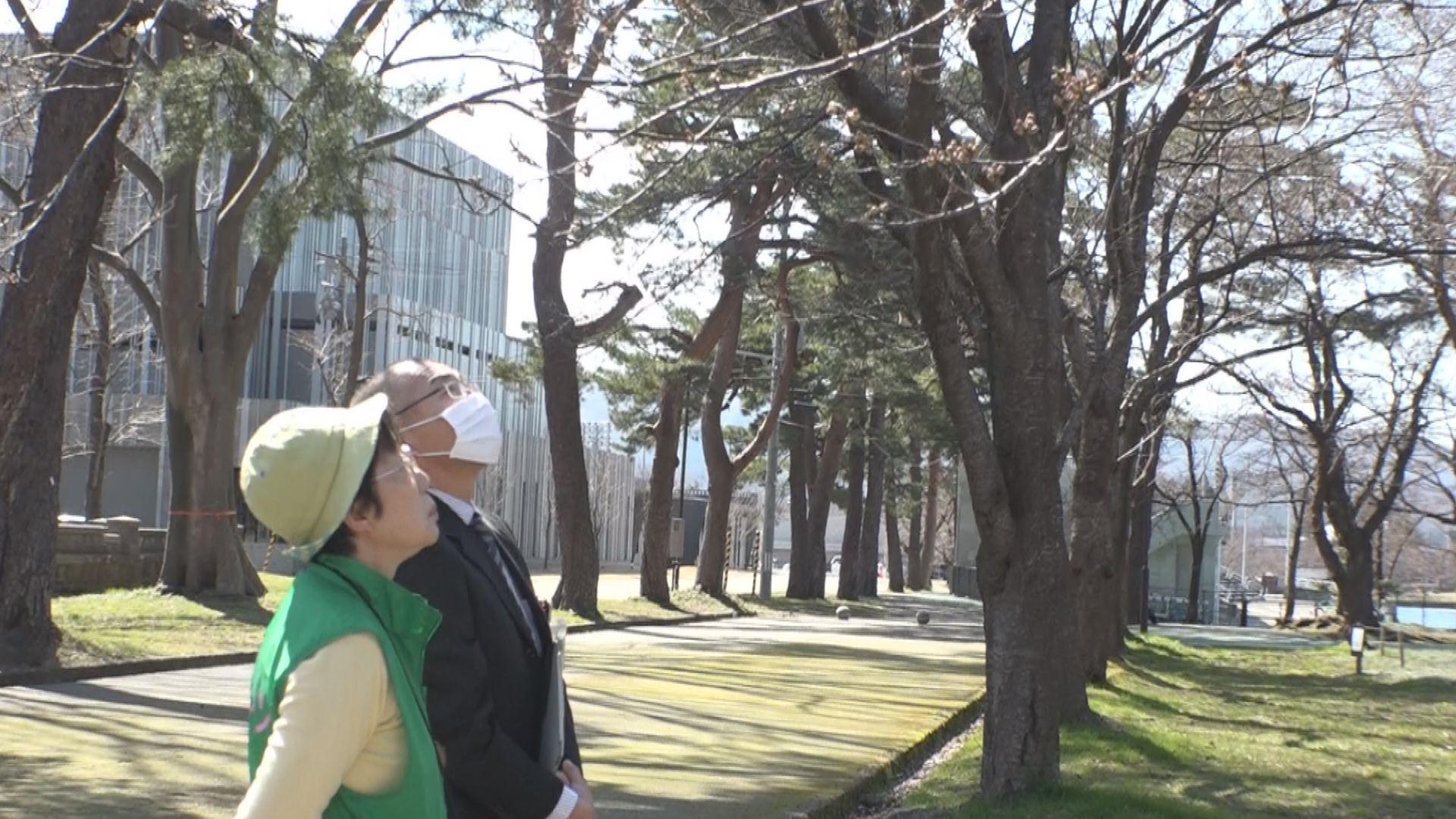 200325_桜の開花調査