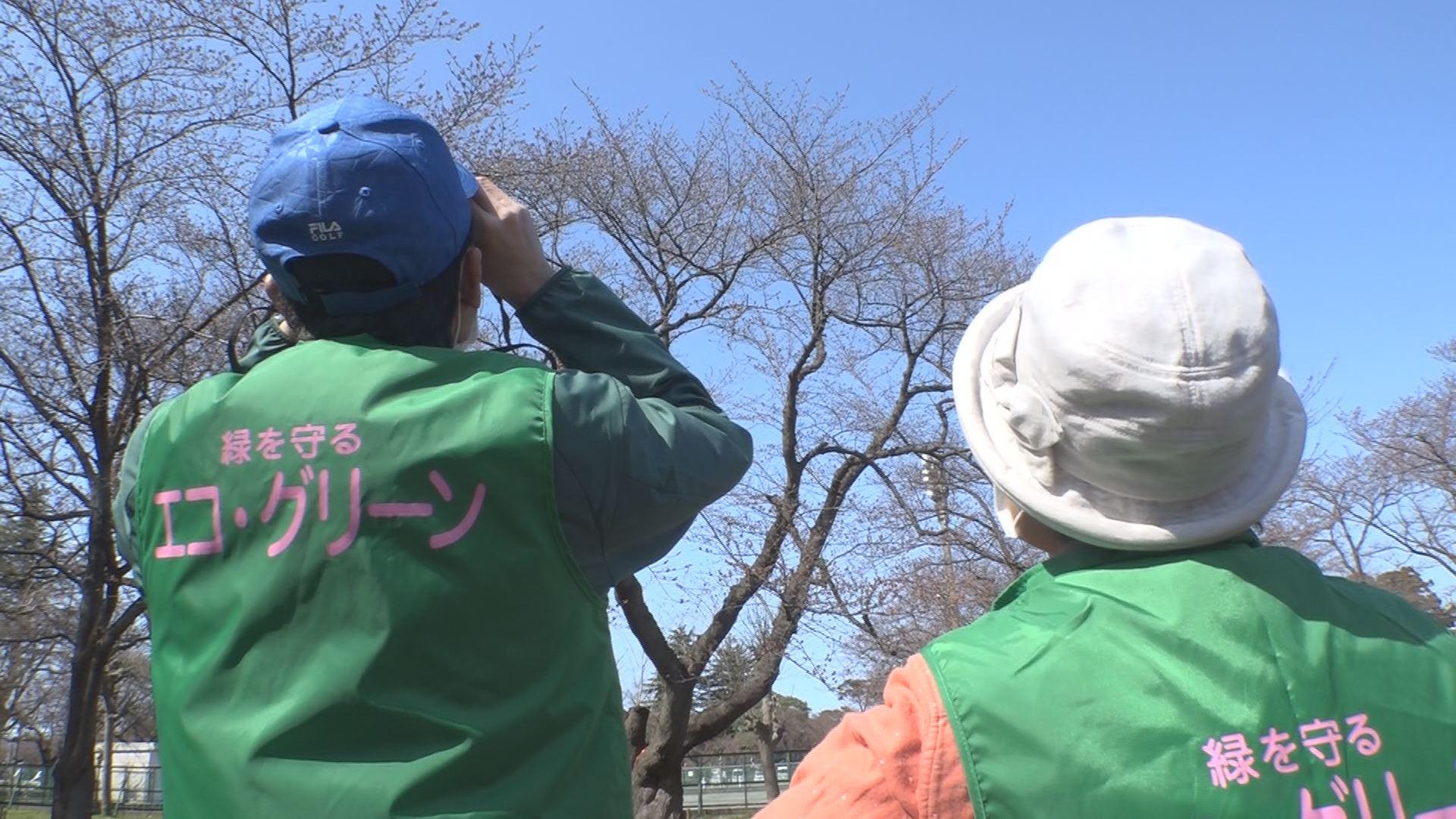 200326_開花調査
