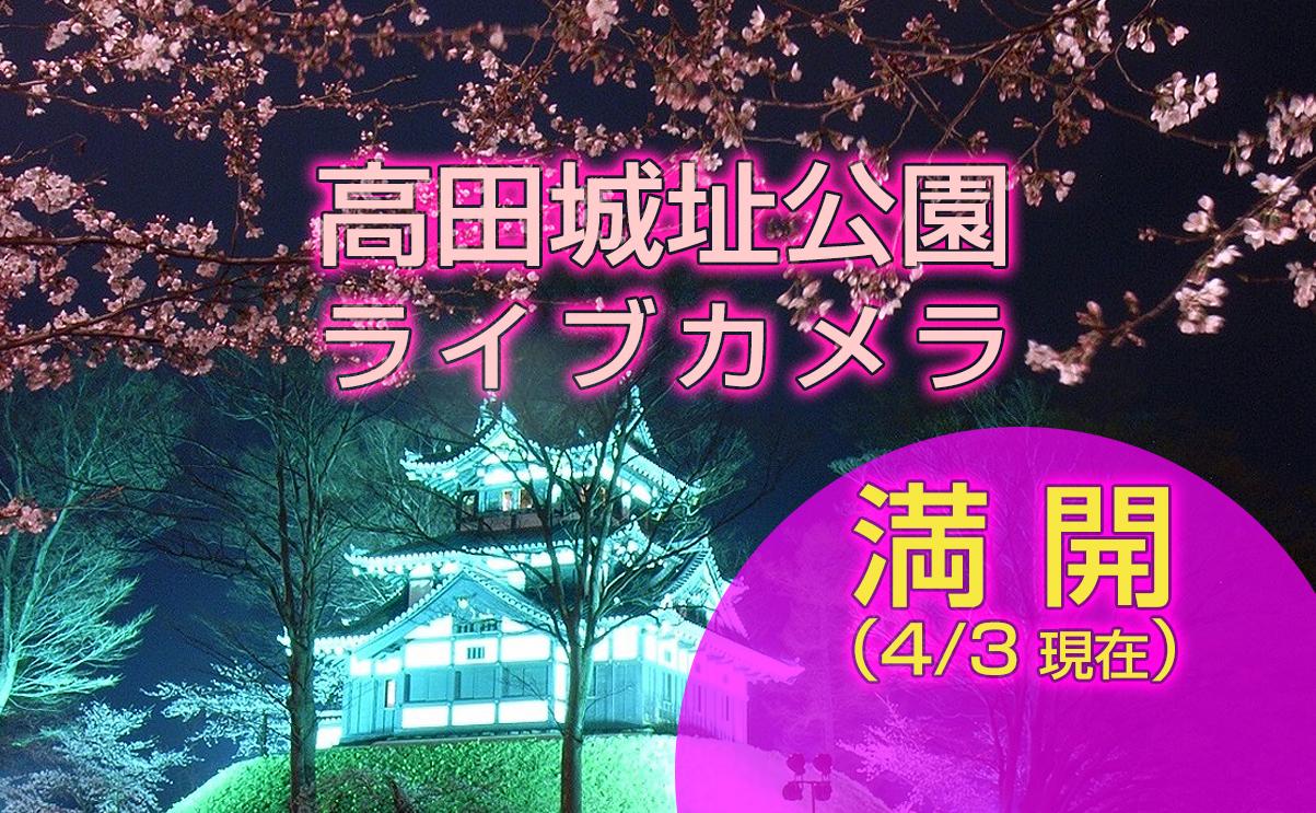 高田城址公園_ライブカメラ(満開)
