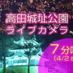 高田城址公園_ライブカメラ(7分咲き)