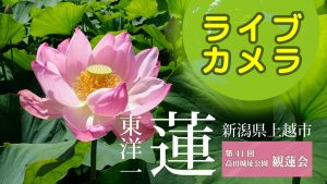 第41回高田城址公園観蓮会ライブカメラ
