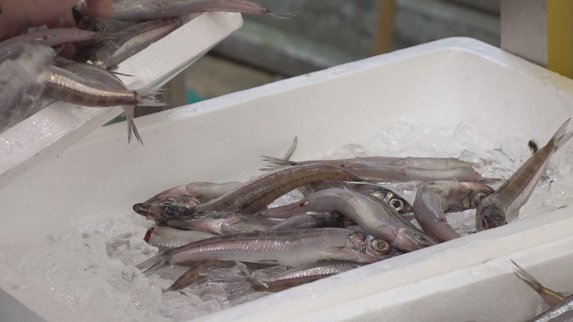 200910_魚①